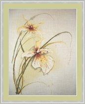 Орхидеи 'Lanarte'