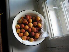Наш урожай абрикосов :-)