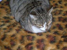 Кошка Ромка.