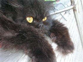 Кошка Ветка.