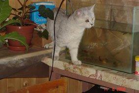 Буся и аквариум