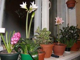 зимний сад в условиях одного подоконника