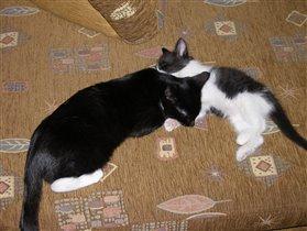 кошки дрыхнут