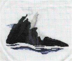 Killer whale 06.26