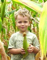 Говорите в кукурузе меня нашли?