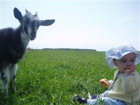 Козы, козы....а говорили они только в носу....