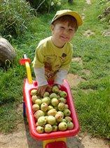 Яблочек кому?