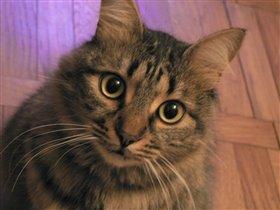 мой кот Белка