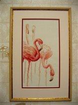 Фламинго 'Золотое Руно'