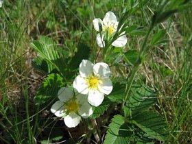 цветы землян 2