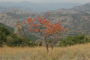 Осень Кара-Дага