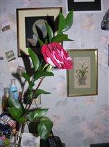 роза на фоне моих работ