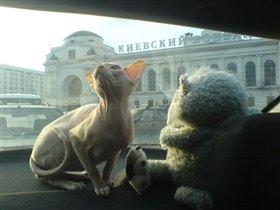 cфинксюшка путешественник