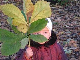 Посмотрю сквозь листик - Осень?