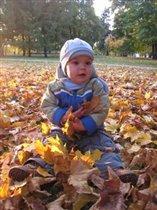 Осень золотом украсила листочки
