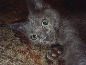 Муся - котенок