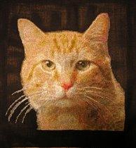 GK117 yellow cat