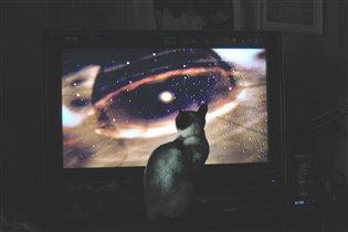 Кошка и космос