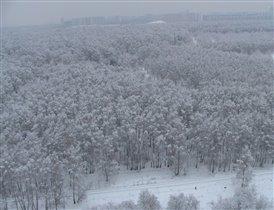 Вид на Царицынский лесопарк с 18 этажа