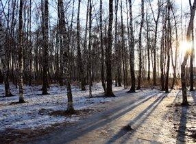 Зимний лес вечером