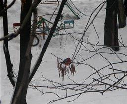 Снегири не гири …