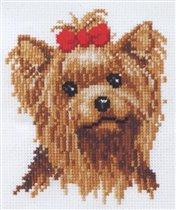 Рыжая собачка
