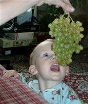 ...Лиса и Виноград...
