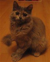 наш котенок превратился в настоящую красавицу