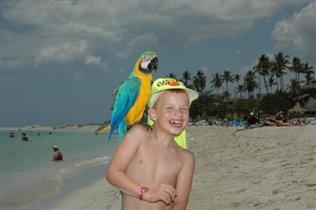 Ну такой классный попугай !