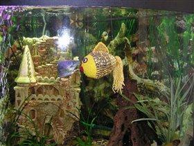 моя золотая рыбина