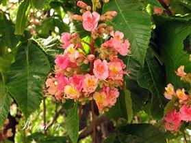 Ботанический сад (Весна'07)