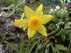 весна 2007- на даче