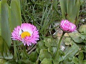 Весна 2007г. -на даче