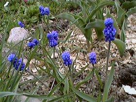 Весна 2007 - на даче