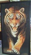Болгарский тигр-подбор