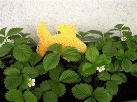 Земляничная прЫнцесса, рстет и развивается только в земляничных зарослях :)) При этом достигает размеров во-о-от такой рыбы ;)  (раздвигаем руки кто на сколько может )