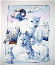 полярные звери