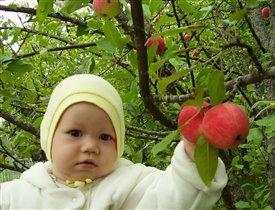 Даня в яблоках