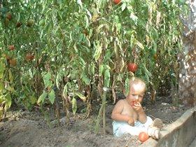 Был в джунглях помидорных, добыл себе еду