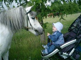Ма!Смотри!Лошадка пришла знакомиться!