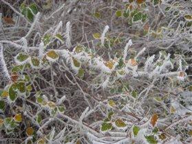 Листики в снежных колючках