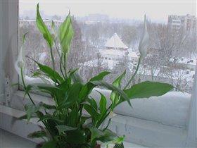 А за окном зима, зима...
