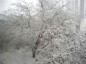 наконец-то!!!выпал снег!!!!ура!!!