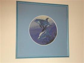 Дельфины 'пристроены'