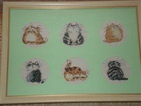 Котики из любимой коллекции