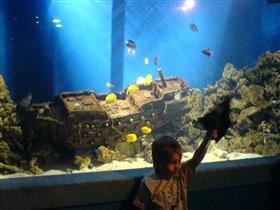 Димка в океанариуме