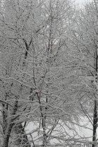 Зима-за окном