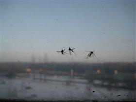 а комарики не спят?