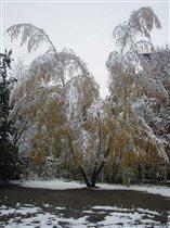 В октябре, в октябре  Все деревья в серебре.