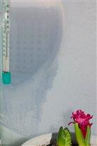 Ни страшен нам ни снег и ни стужа , даже в -50 может цвести гиацинт...